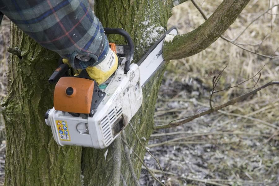 boom verwijderen